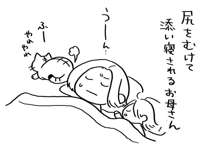 ねこと暮らし04