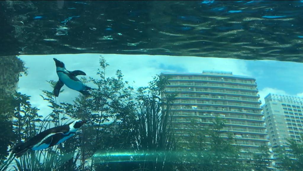 サンシャイン水族館の空飛ぶペンギン