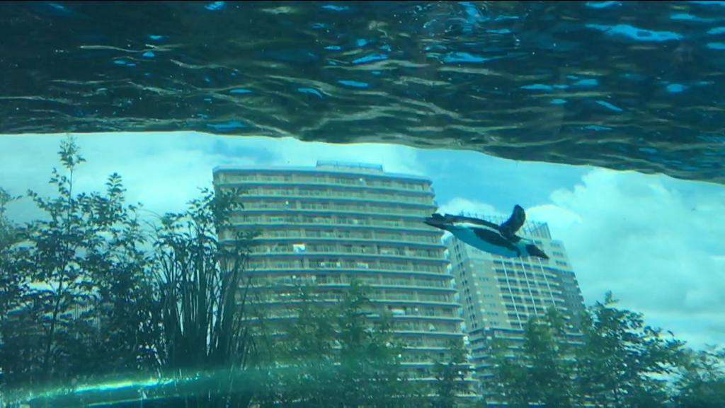 池袋サンシャイン水族館のペンギン
