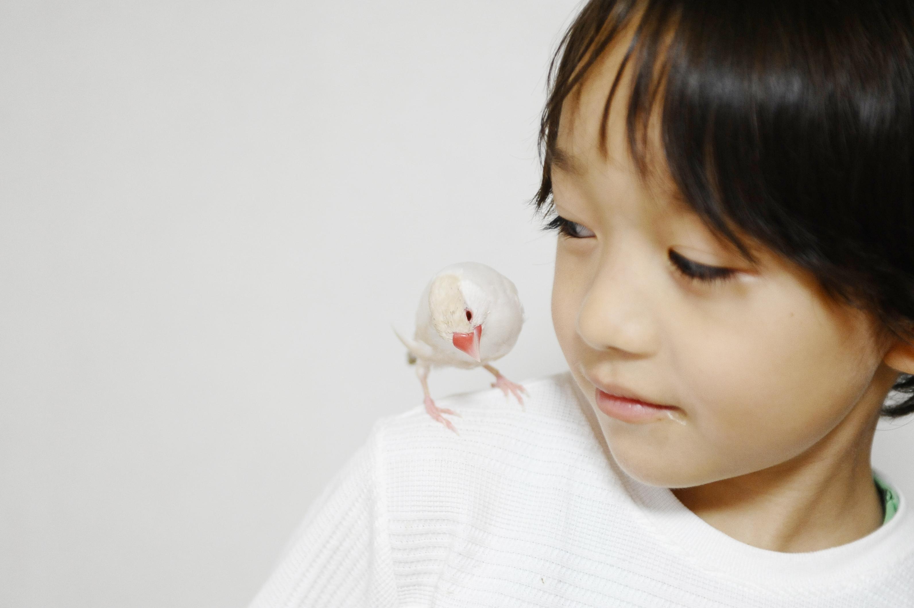 文鳥と子供