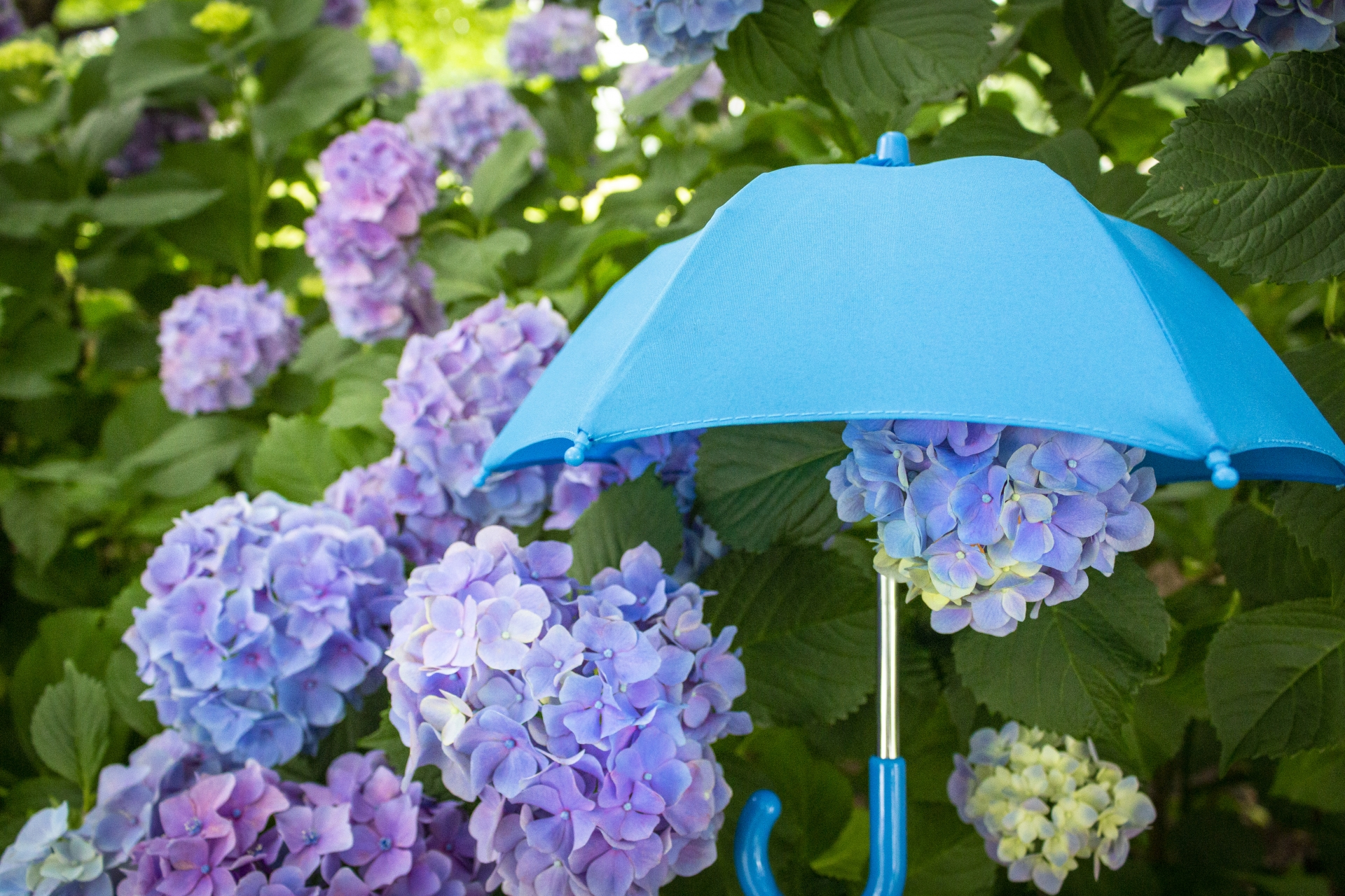 傘で守るソーシャルディスタンス